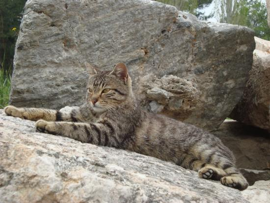 Celsus Travel: Ephesus cat