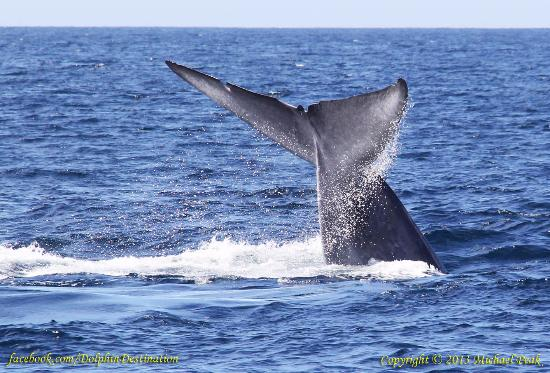 Pacific Nature Tours San Diego
