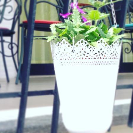 Hotel Lux Bed & Breakfast: Flowers