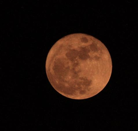 Jupiter, Floride : the rise of the Full Moon as seen from Sawfish Bay Park