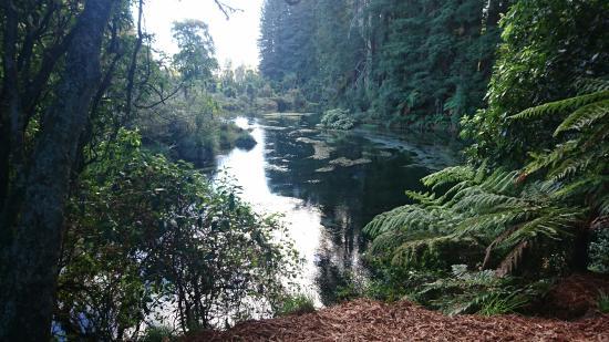 Hamurana, Nieuw-Zeeland: DSC_0791_large.jpg