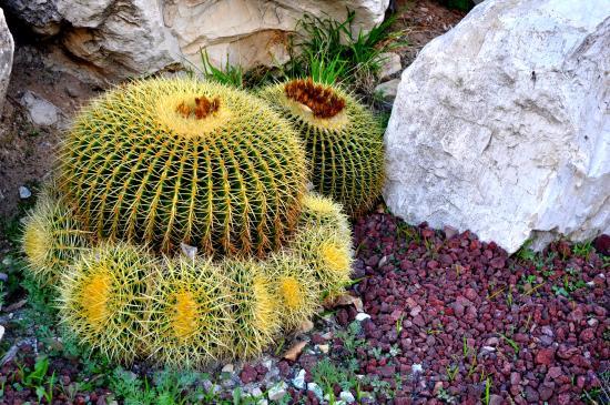 Palos Verdes Estates, CA: Landscaping