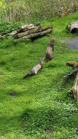 Hankensbuettel, Alemania: Grote verscheidenheid aan dieren in het otter centrum.