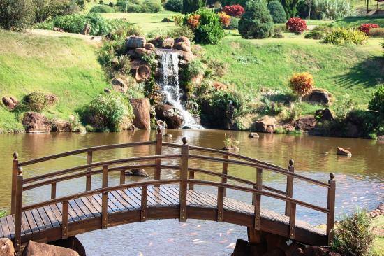 fotos de um jardim lindo : fotos de um jardim lindo:Um lindo jardim com carpas coloridas. – Foto de Parque do Japão