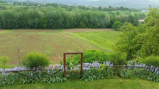Vicchio, Italy: 20160424_123505_large.jpg