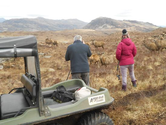 Lochcarron, UK : Nice couple, who didn't really believe they'd get close to the deer.