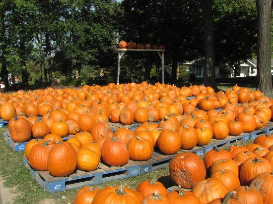Chesterland, OH: Patterson Fruit Farms