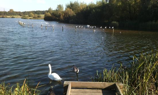 West Bromwich, UK: fishing pitch at swan pool