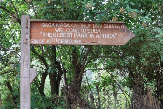 Menagesha Suba Forest Park