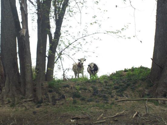 Hagerstown / Antietam Battlefield KOA Foto