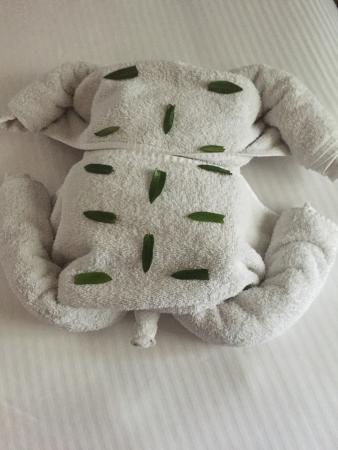 Mayan Princess Beach & Dive Resort: Housekeeping enjoyed making towel animals every day