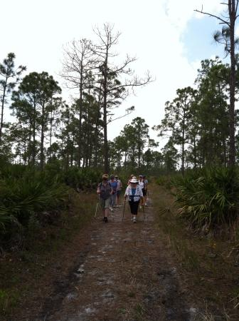 Prairie Pines Preserve: You can see, there are no paved paths but there is a boardwalk.