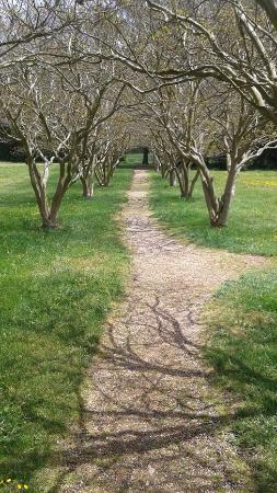 Charles City, เวอร์จิเนีย: Path to the cemetery.