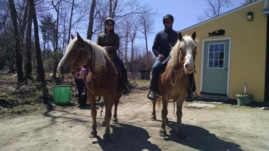 Princeton, MA: Meet Dusty and Hercules! Friendly and mild mannered horses!!