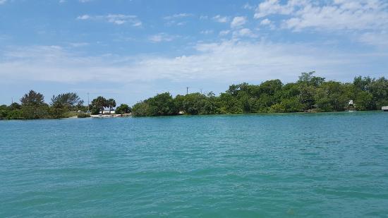 Nokomis, فلوريدا: 20160425_112456_large.jpg