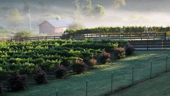 Tiger, GA: Morning in the vineyard with the mist rising after the sun hits the vines and the classic red ba