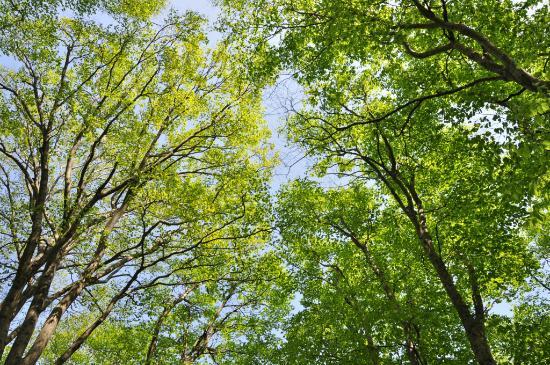 Hodatsushimizu-cho, Japan: 宝達山頂のブナ林