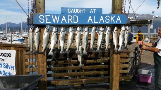 Seward, Alaska: The fishing is great in Alaska...Silver Salmon
