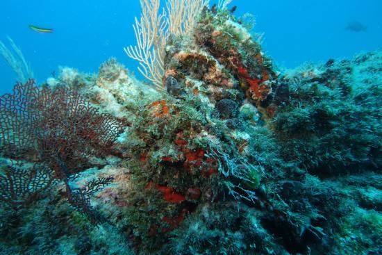 Drake Bay, Costa Rica: beautiful coral