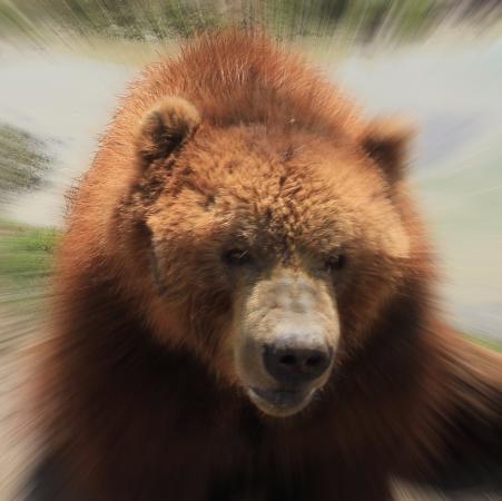 เซแกง, วอชิงตัน: Photoshopped bear.