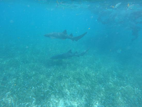how to catch a nurse shark