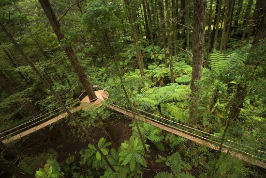 Rotorua District, Nuova Zelanda: Redwoods Treewalk