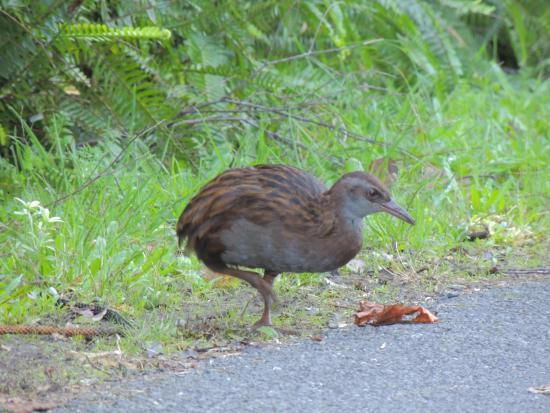Russell, Nueva Zelanda: Weka on Flagstaff Hill