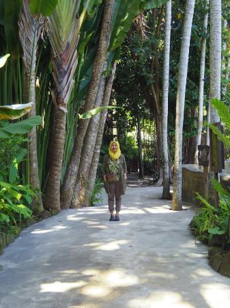 Bali Zoo: IMGP0704_large.jpg
