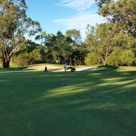 The Vines, أستراليا: Gold Course