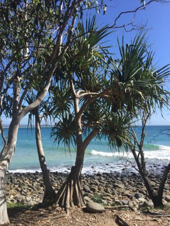 Noosa, Australia: Amazing sights along the boardwalk. Definitely a must do!!