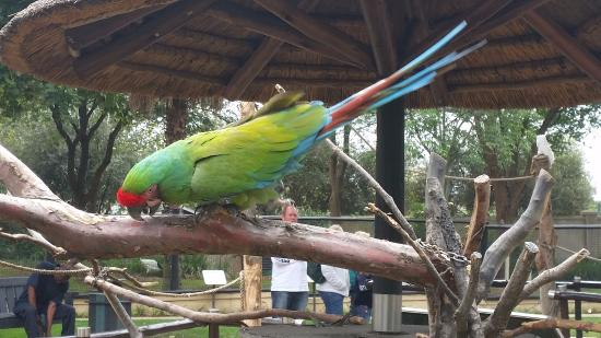 Monte casino bird park map
