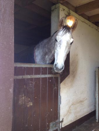 Genneville, Frankrike: Une journée en Normandie au milieu des chevaux. Un havre de paix!