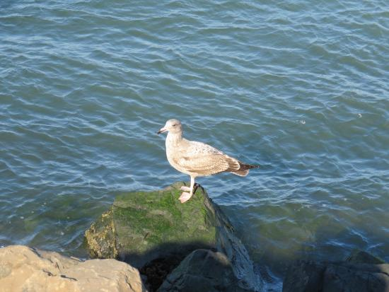 Barnegat Light, Νιού Τζέρσεϊ: ...And the Gulls doing their thing...... It must be hell on Earth for them!! Semper Fi! Godspeed