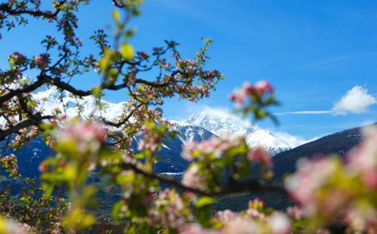Renon, Italia: Apfelblüte Südtirol