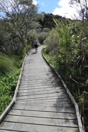Waikanae, Nueva Zelanda: Boarded walkway through the wetland