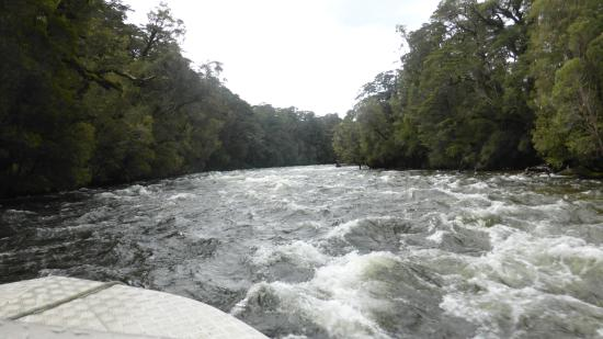 Wairaurahiri Wilderness Jet: Dancing water provides little challenge to a well powered jet boat