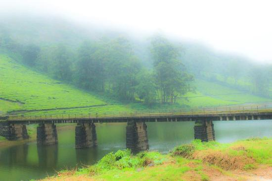 Theni, Индия: In Meghamalai / High Wavy Mountains