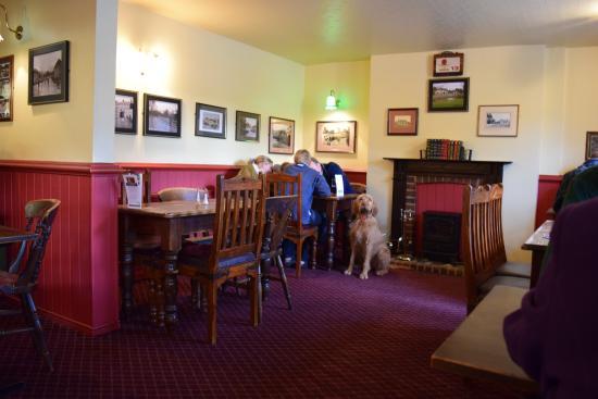 Coombe Bissett, UK: dog friendly!
