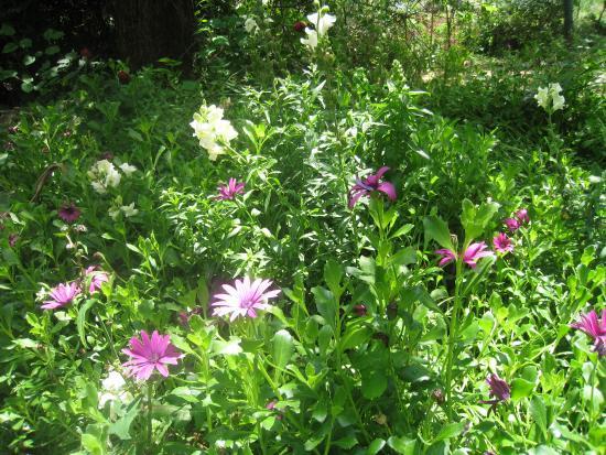 Hotel Mitzpe Hayamim: jardins fleuris