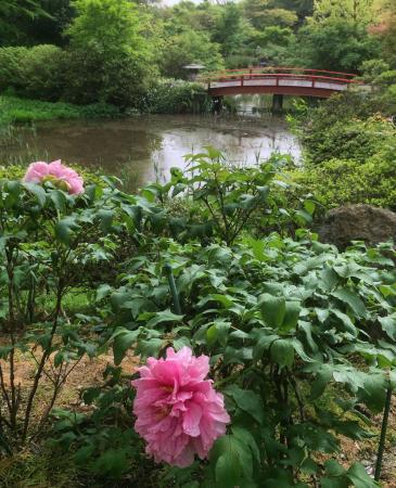 Tsukuba Peony Garden (Formerly Tsukuba Peony Garden)