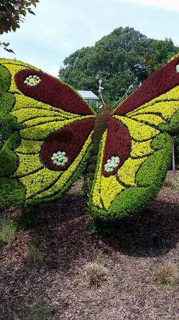 Atlanta Botanical Garden: Butterfly Plant/flower Sculpture.