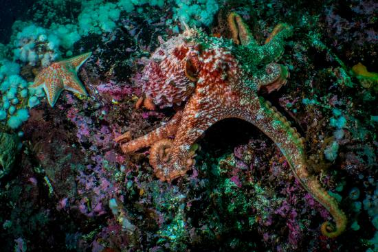 Port Hardy, Kanada: Amazing encounter opportunities with octopus, seals, sea lions, wolf eels