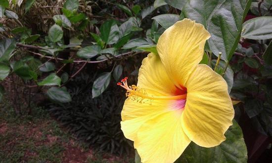Pousada Flor da Terra