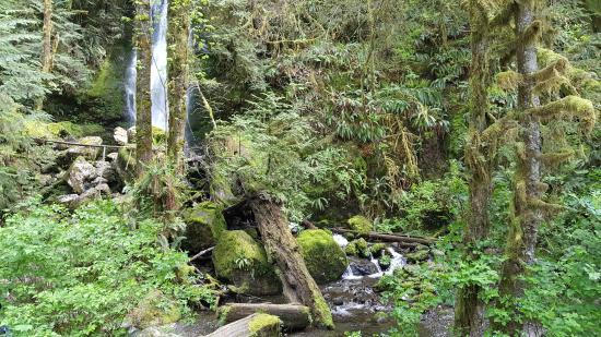 Quinault, واشنطن: Gatton Creek Falls