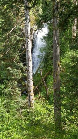Quinault, واشنطن: Merriman Falls