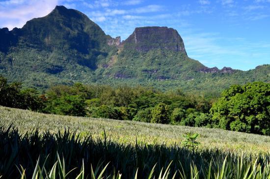 Moorea, Fransız Polinezyası: lungo la Route Des Ananas