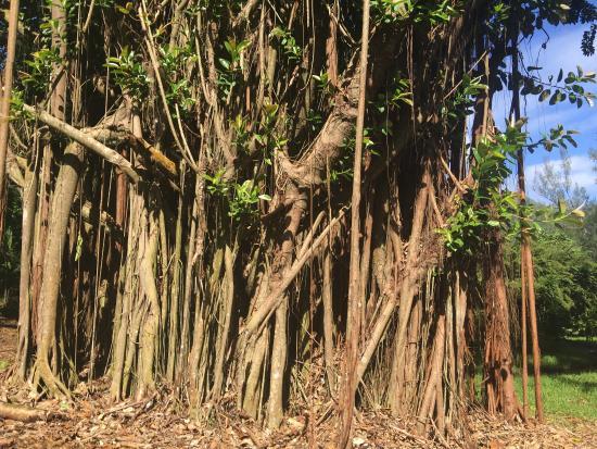 Moorea, Fransız Polinezyası: photo3.jpg