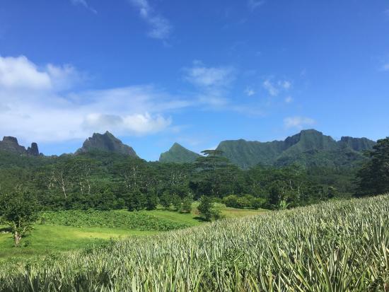 Moorea, Fransız Polinezyası: photo4.jpg