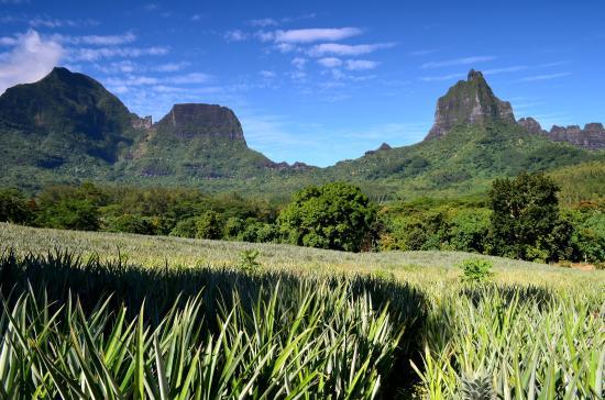 Moorea, Fransk Polynesia: lungo la Route Des Ananas