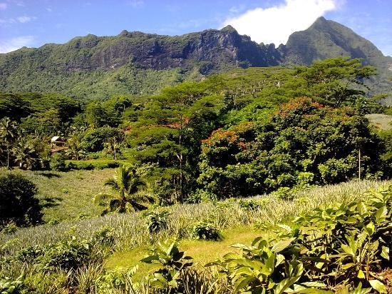 Moorea, French Polynesia: lungo la Route Des Ananas